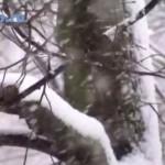 Metel|blizzard