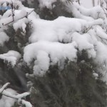 Poslednij-sneg