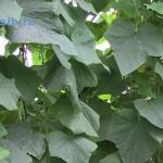 Ogurtsy|cucumbers