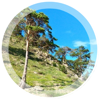 Gory-Bajkala-2016