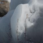Suhaya-trava-v-snegu