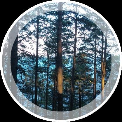 Wood-к-гор-Bajkala