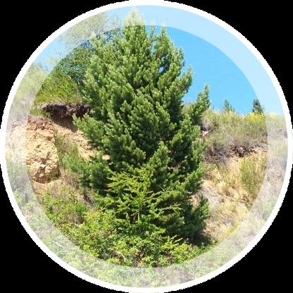 Priroda-vokrug-bajkala